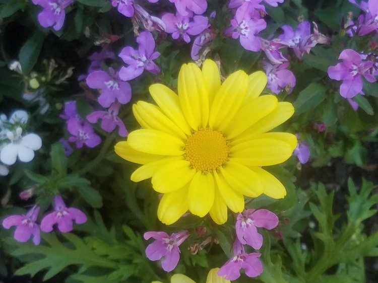 Purple and Yellow to Cheer you up?