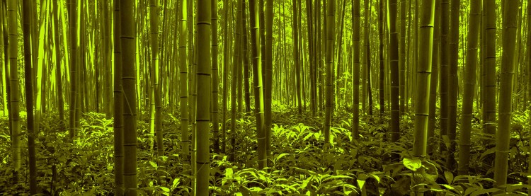Bamboo Forest Twilight