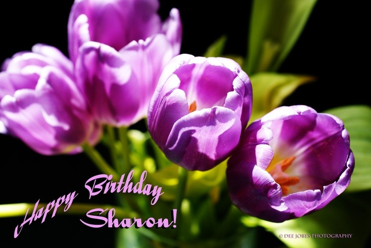 Happy Birthday Sharon !