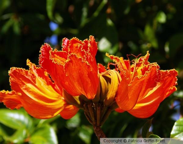 Fiery Petals