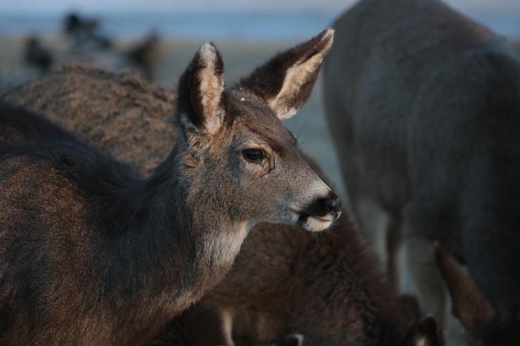 smile deer :)