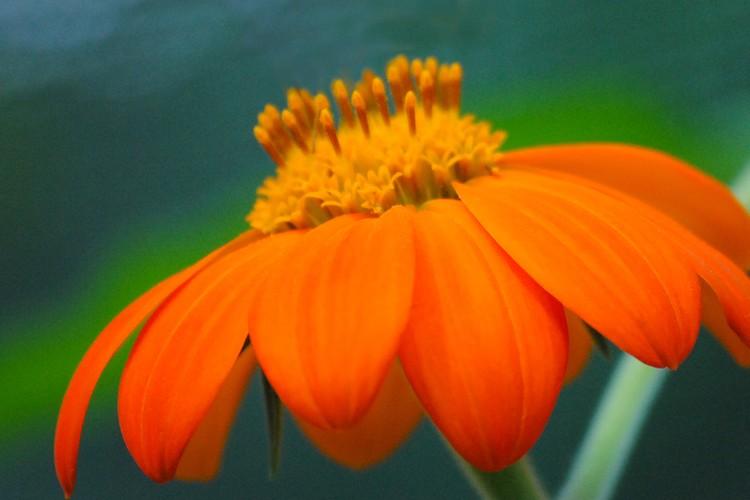 Evening Orange