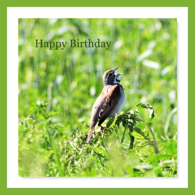 Happy Birthday Birdsong
