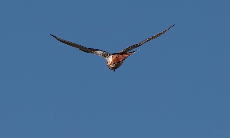 flying away....