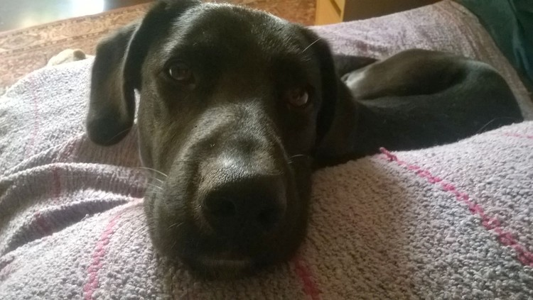 BART MY DOG