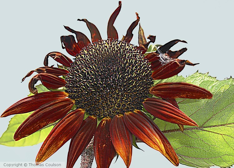 Sunny the Flower