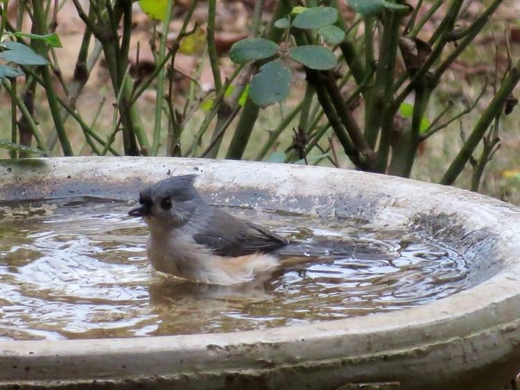 Birdbath Bliss)