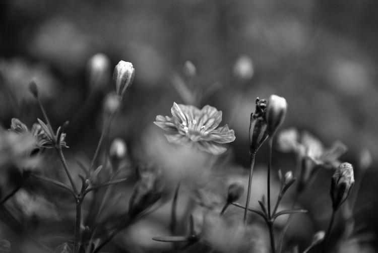 Delicate Little Flowers in the Garden