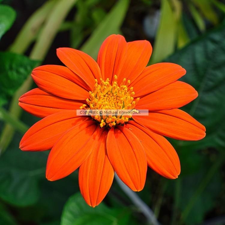 Orange Perfection