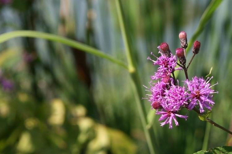 PURPLE LITTLE FLOWER