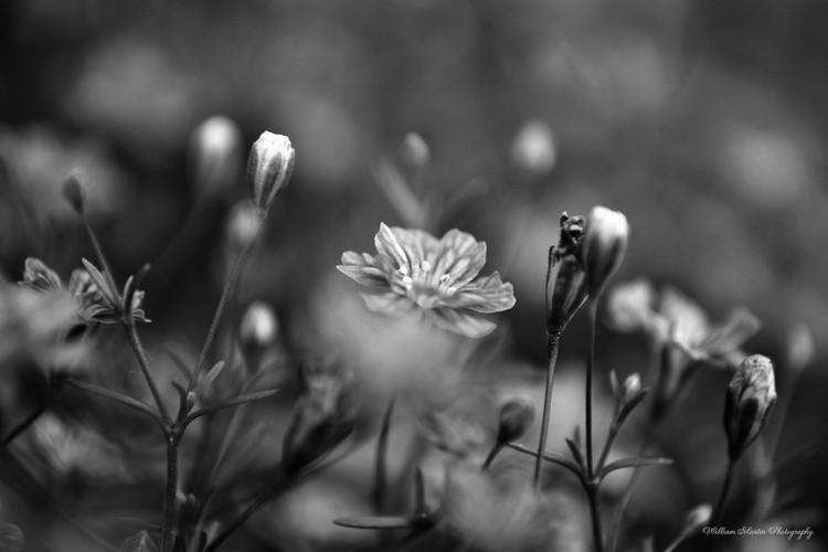 Delicate Flowers in the Garden