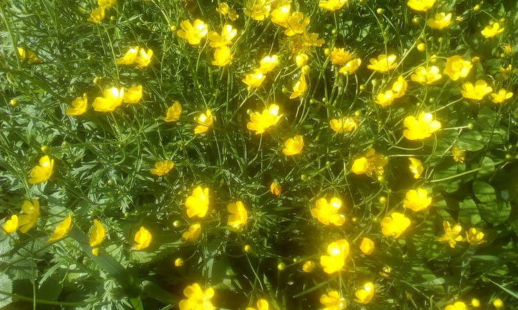 Cheerful little May flowers