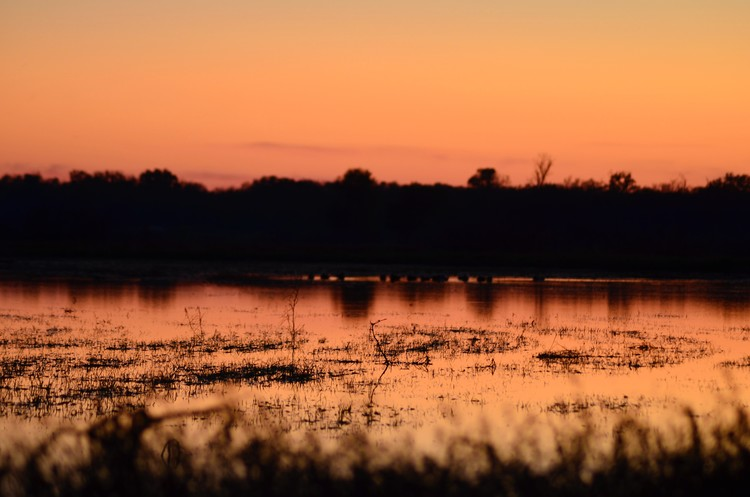 Sundown Marsh