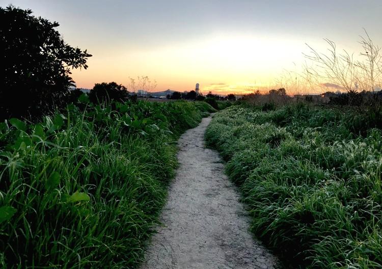 Spring Trail at Dawn - March 2019