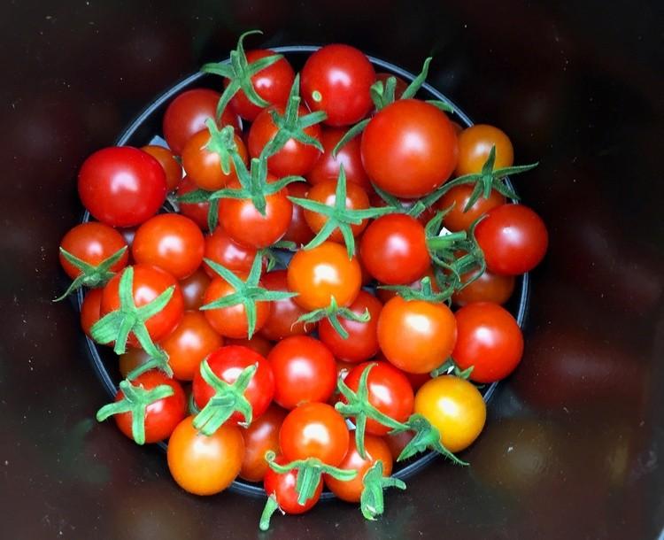 Karen Muro cherry tomatoes