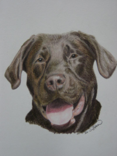 Chocolate Labrador By Ruth Tyson