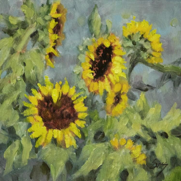 Sunflower Sighting