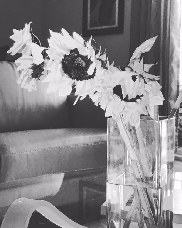 b&w sunflowers