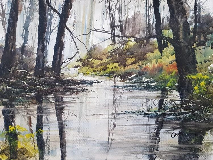 Sutton Park Stream