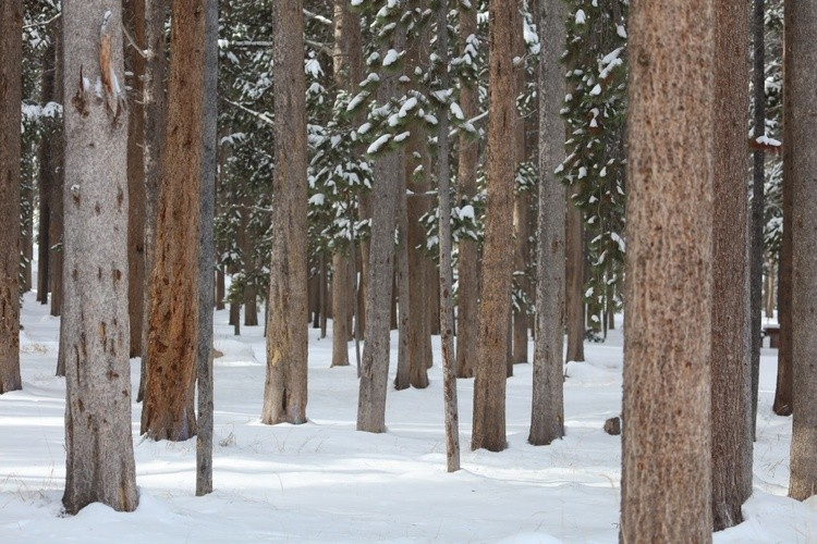 do you behold a forest or a mass of trees ?