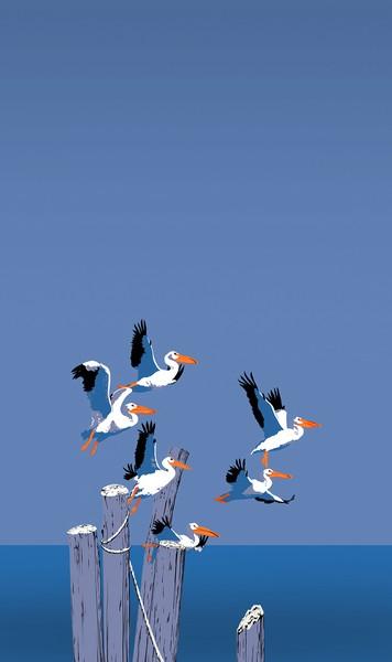 Pelicans In Flight Custom Phone Case Art