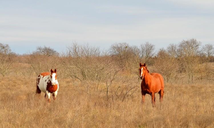 Two Fine Horses