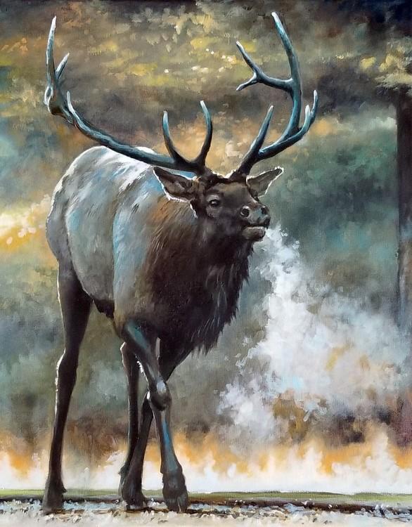 Early morning elk