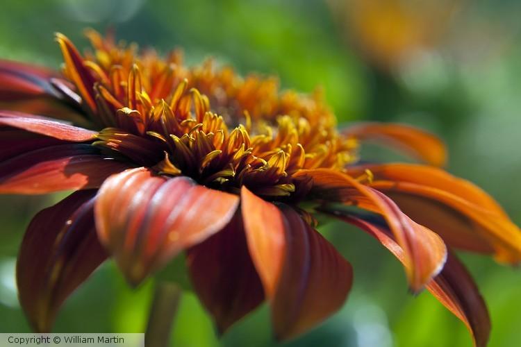 Orange Flower Warm Color Photo