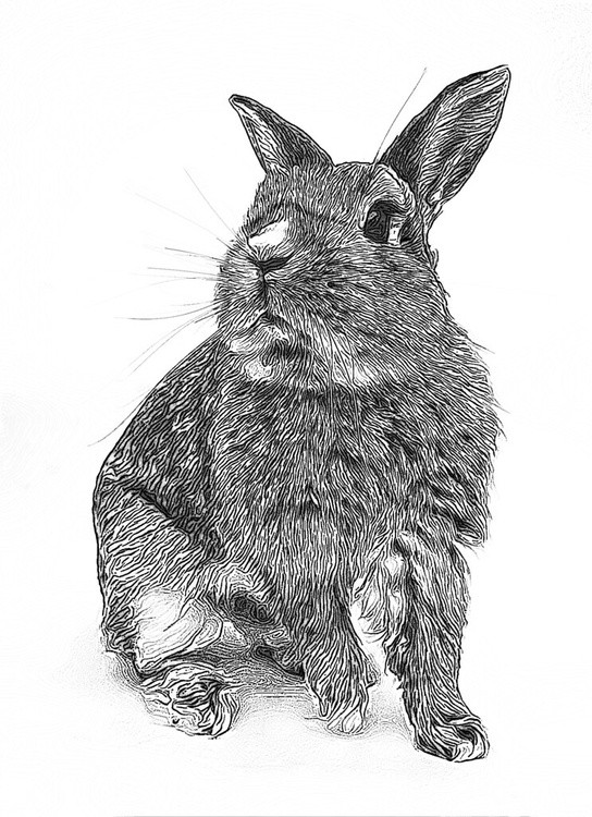 Bunny Illus