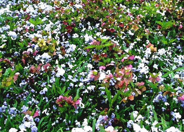 Carpet of Spring