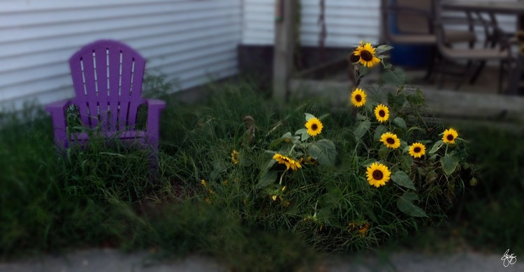 Purple Chair and Sunflowers