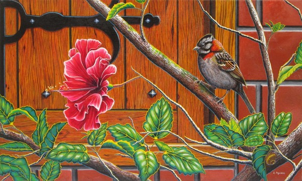 The Sparrow who visit your window