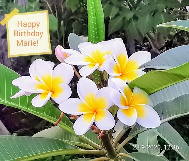 Happy Birthday Marie!