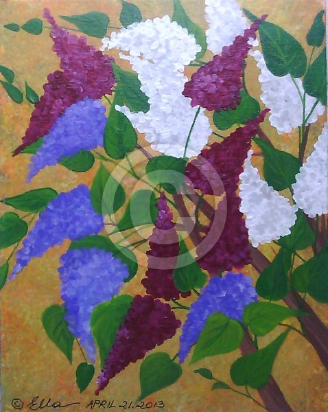 Barbaras Lilacs