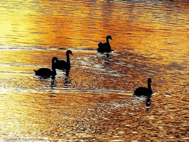 Golden Pond, 10-30-2017