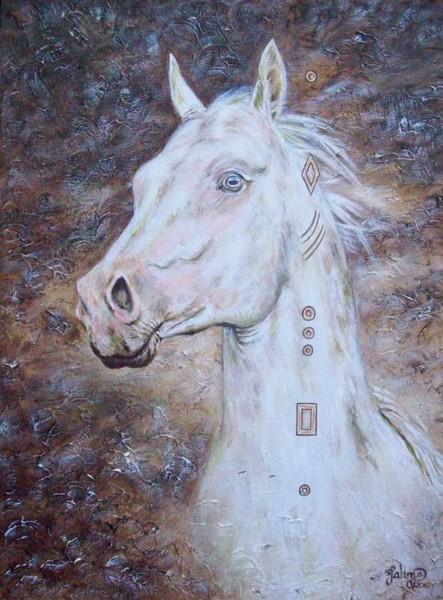 Habib Shael--Akhal Teke Stallion