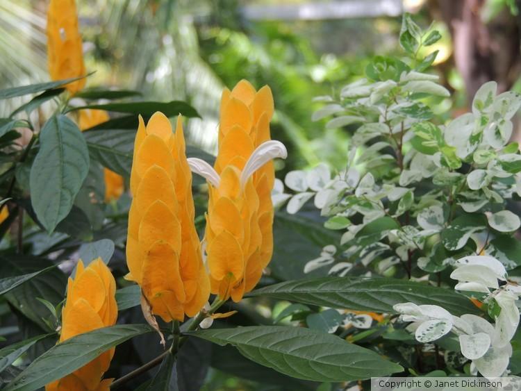 Orange Alive