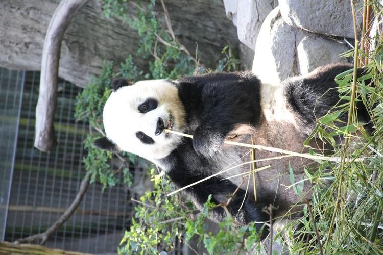 KAREN MURO PANDA BEAR