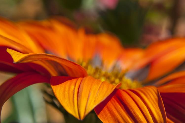 Stunning Orange Flower Study 1