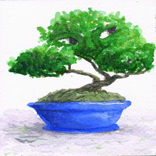 Bonsai Spirit