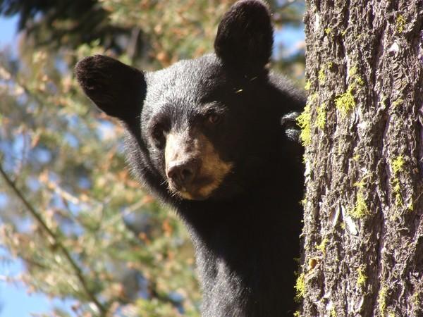 A Real Teddy Bear