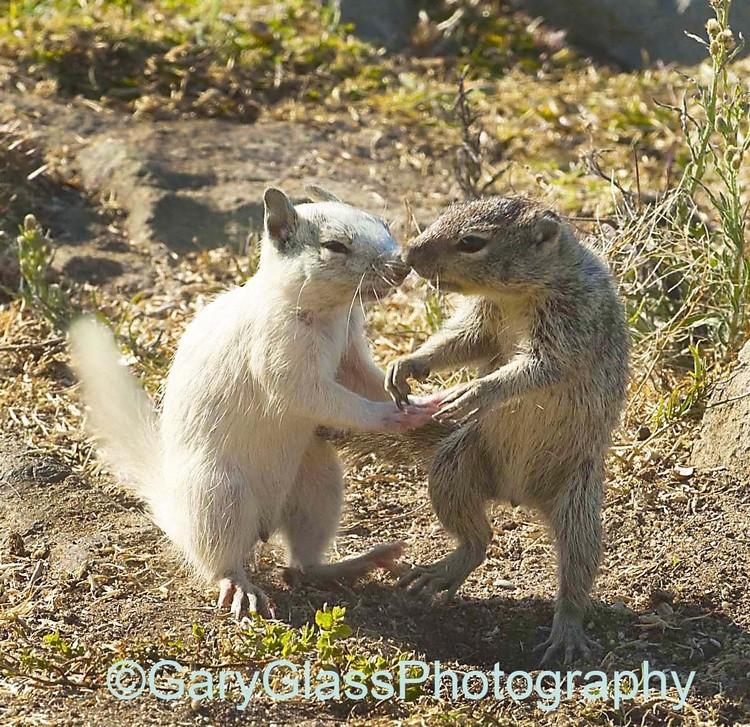Squirrel Tango