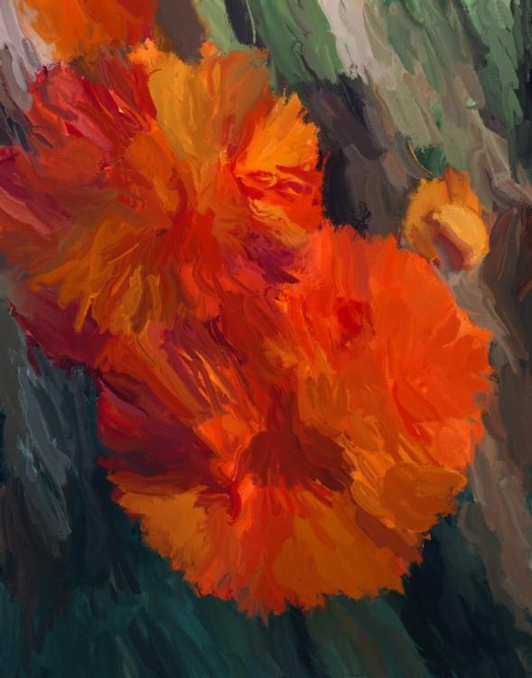Marigolds In Bloom
