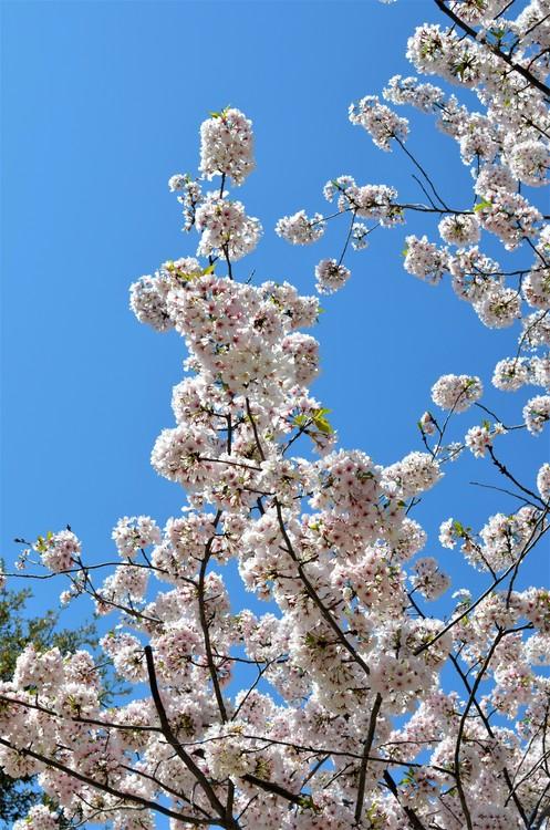 Blooms 'n' Blue Sky