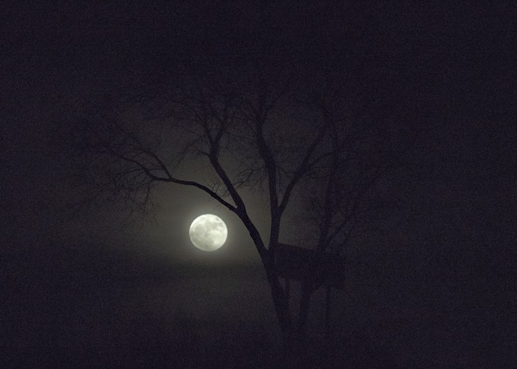Moon under Tree