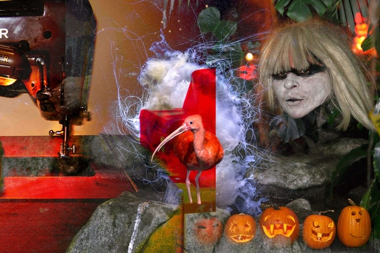 Graham's Pumpkins 2