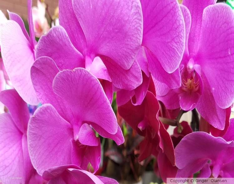 Pink, Purple and Turquoise Orchids!!