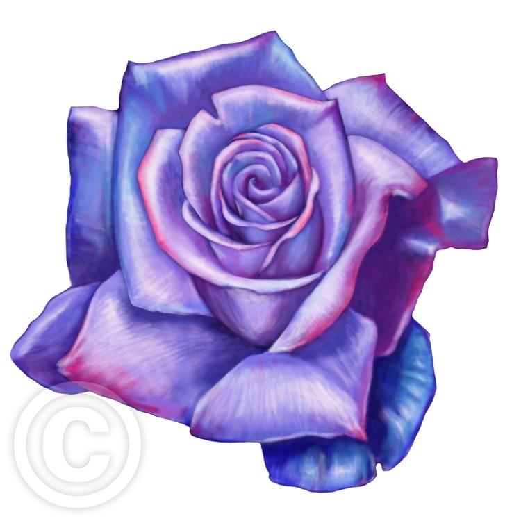 purpleRose03