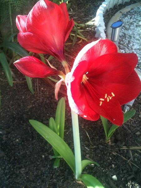 love my garden 2
