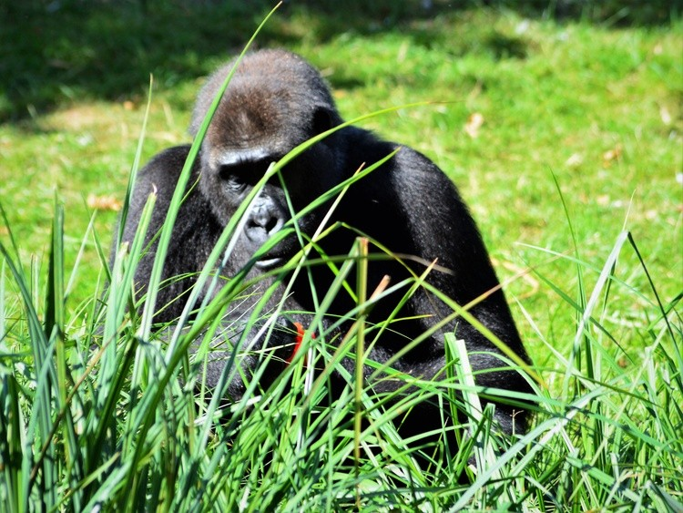 A DAY AT THE ZOO : THE BOSS EATING A SWEET PEPPER ..